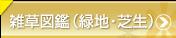 雑草図鑑(緑地・芝生)